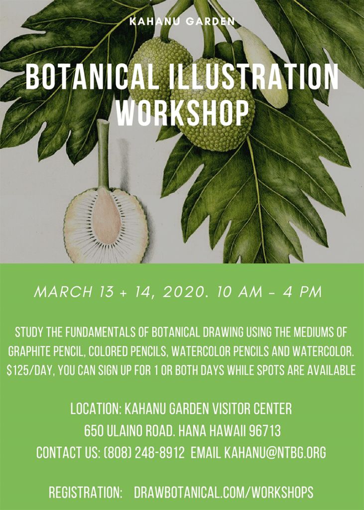 Botanical Illustration Workshop at Kahanu Garden
